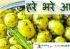 हरे भरे आलू - Green Baby potato recipe