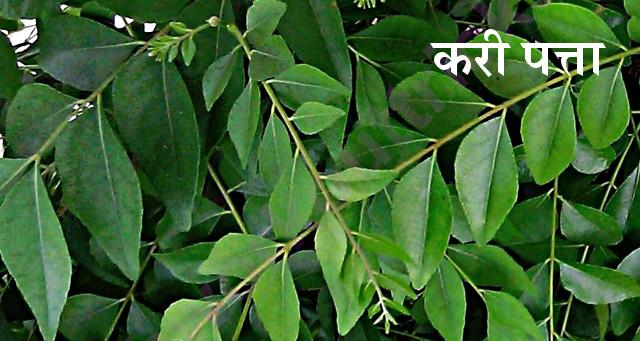 Image result for करी पत्ता