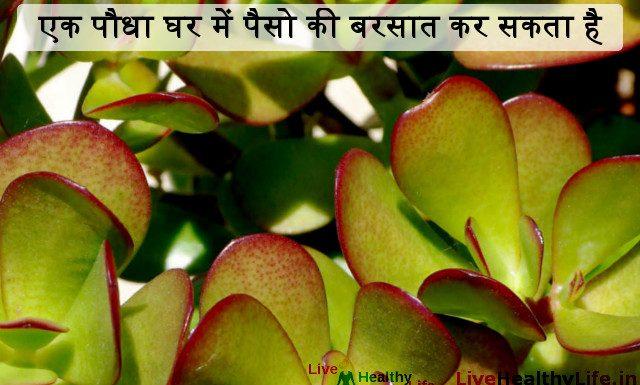एक पौधा घर में पैसो की बरसात कर सकता है